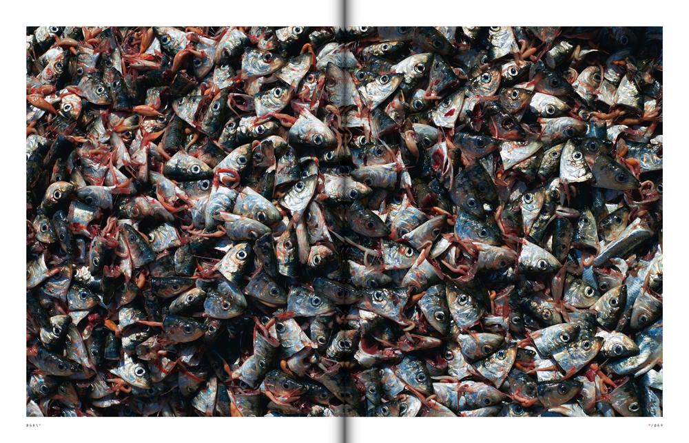 Fish spread.jpg