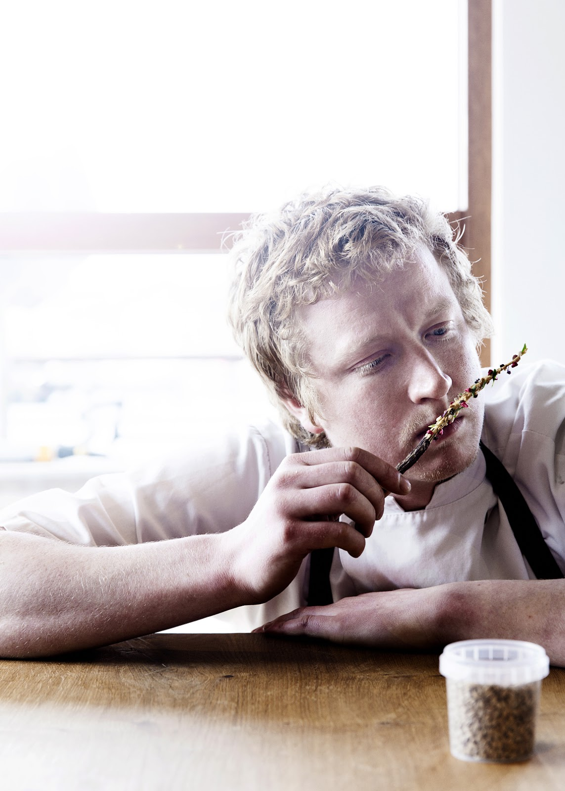 Eating bugs, Noma-style